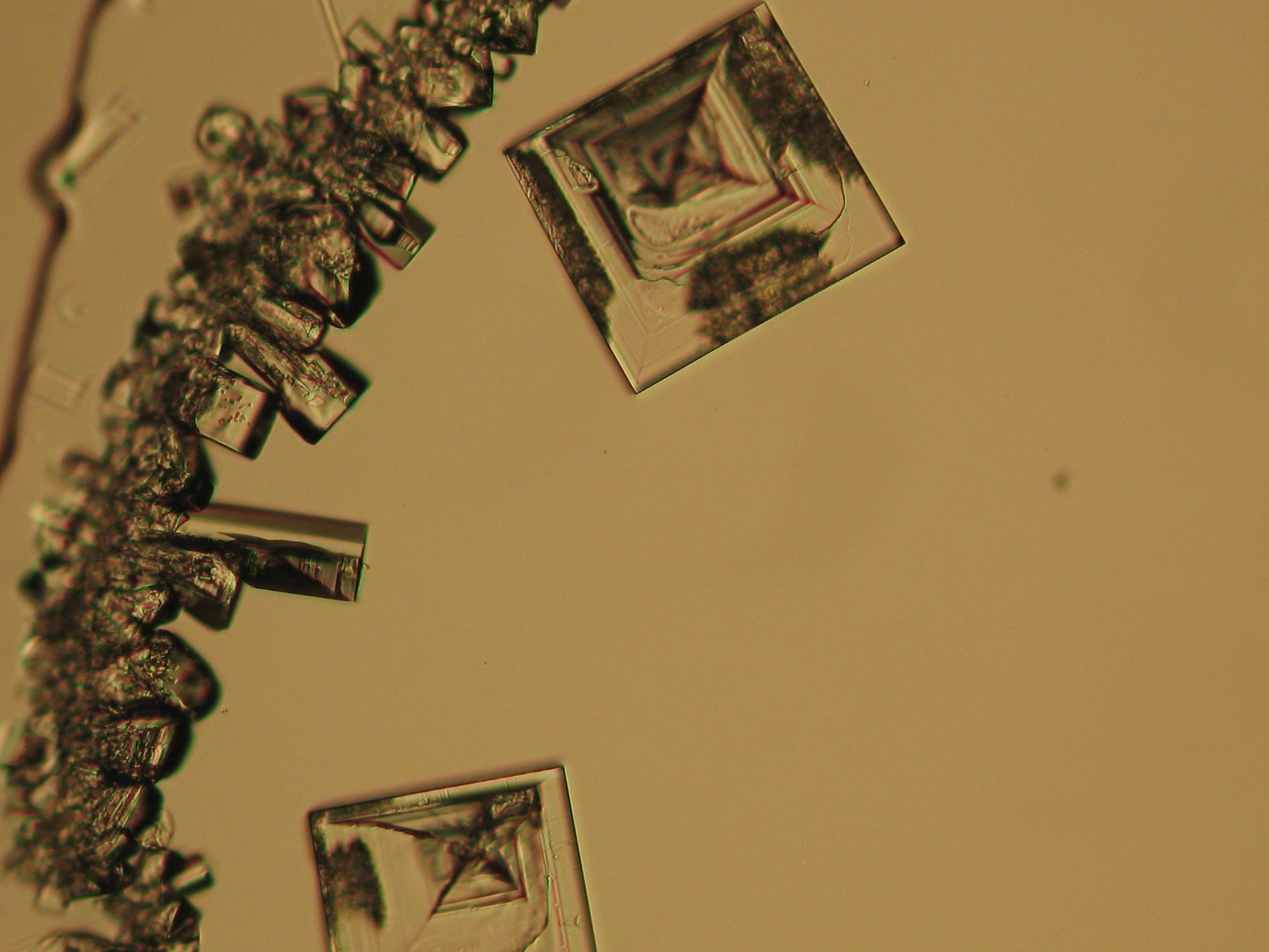 NaCl 27.4.2006-10x.JPG