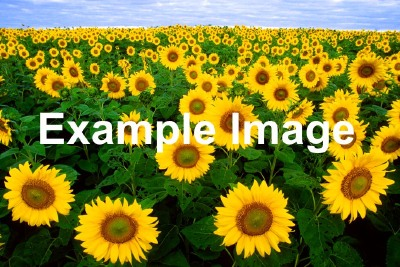 Example sunflower image
